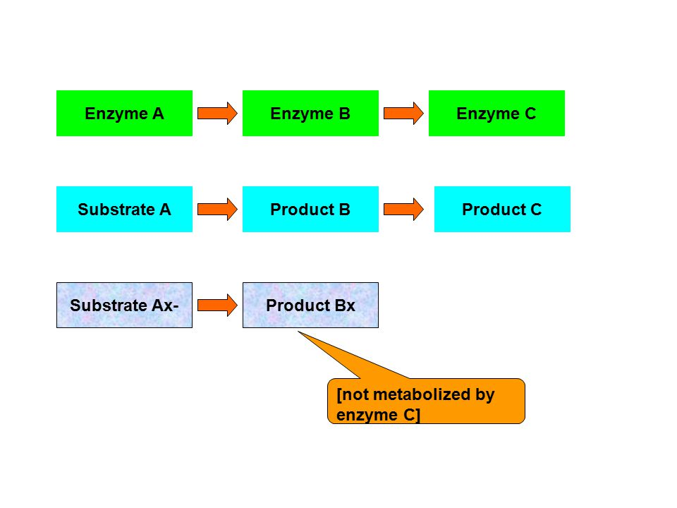 Enzyme A Substrate Ax- Substrate AProduct BProduct C Enzyme CEnzyme B Product Bx [not metabolized by enzyme C]