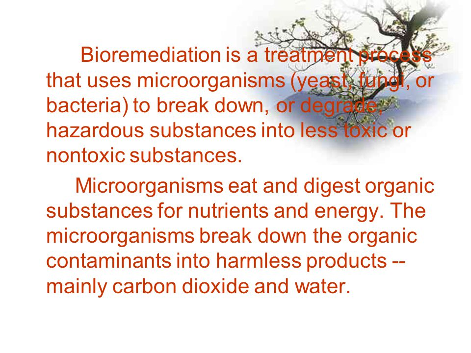 Bioremediation is a treatment process that uses microorganisms (yeast, fungi, or bacteria) to break down, or degrade, hazardous substances into less t