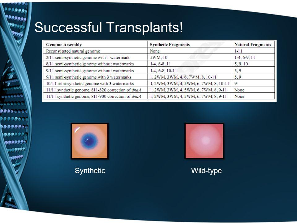 Successful Transplants! Wild-typeSynthetic