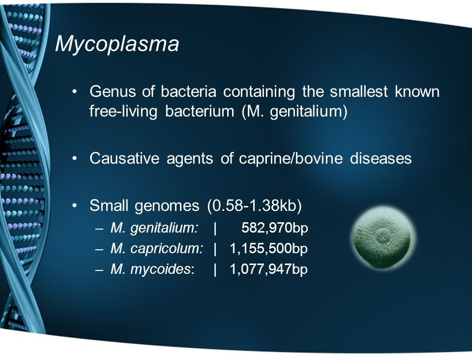 Mycoplasma Genus of bacteria containing the smallest known free-living bacterium (M.