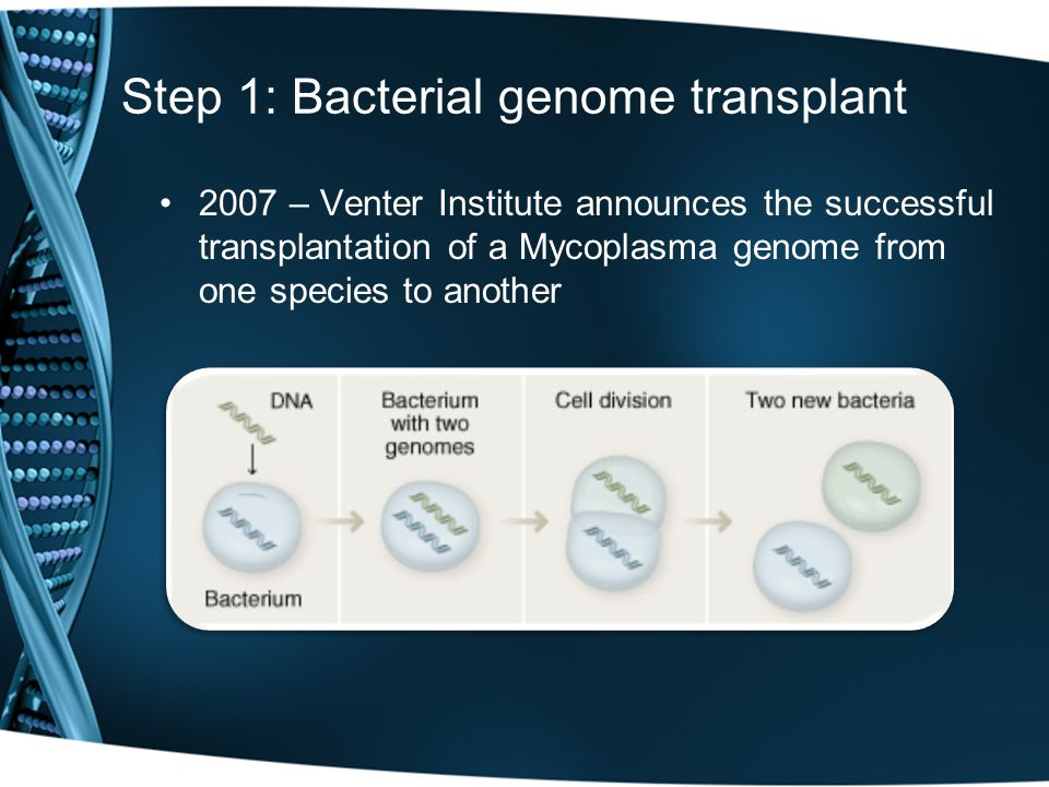 Step 1: Bacterial genome transplant 2007 – Venter Institute announces the successful transplantation of a Mycoplasma genome from one species to another