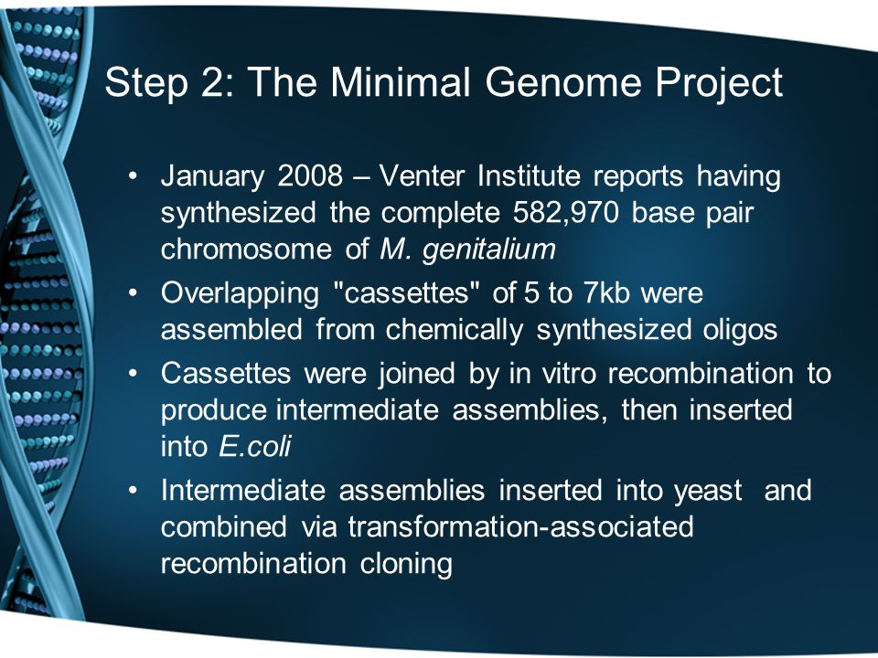 Step 2: The Minimal Genome Project January 2008 – Venter Institute reports having synthesized the complete 582,970 base pair chromosome of M. genitali