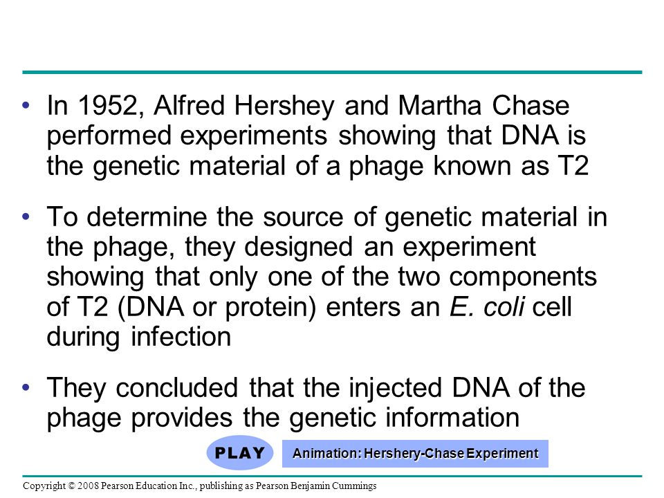 In 1952, Alfred Hershey and Martha Chase performed experiments showing that DNA is the genetic material of a phage known as T2 To determine the source