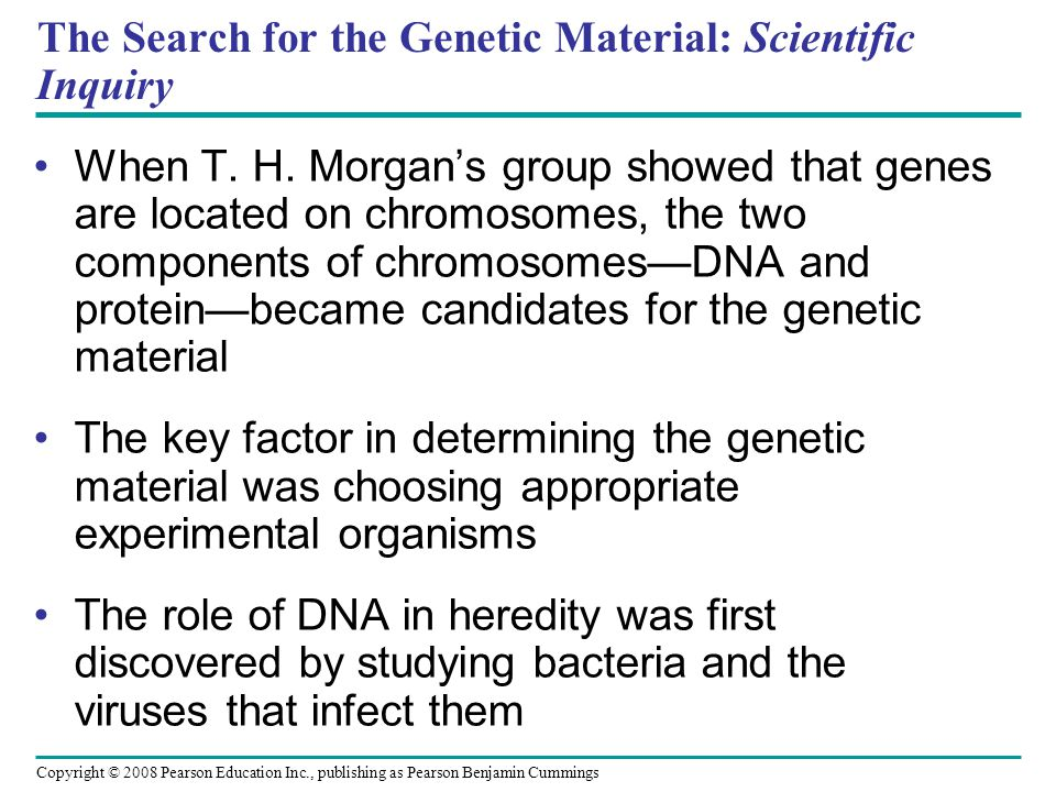 The Search for the Genetic Material: Scientific Inquiry When T. H. Morgan's group showed that genes are located on chromosomes, the two components of