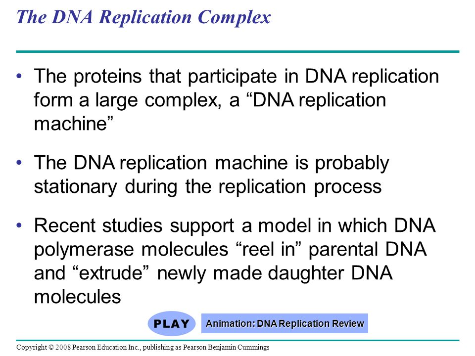 "The DNA Replication Complex The proteins that participate in DNA replication form a large complex, a ""DNA replication machine"" The DNA replication mac"