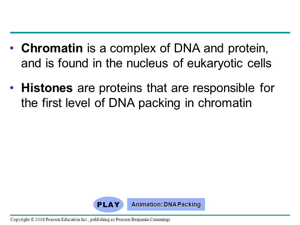 Chromatin is a complex of DNA and protein, and is found in the nucleus of eukaryotic cells Histones are proteins that are responsible for the first le