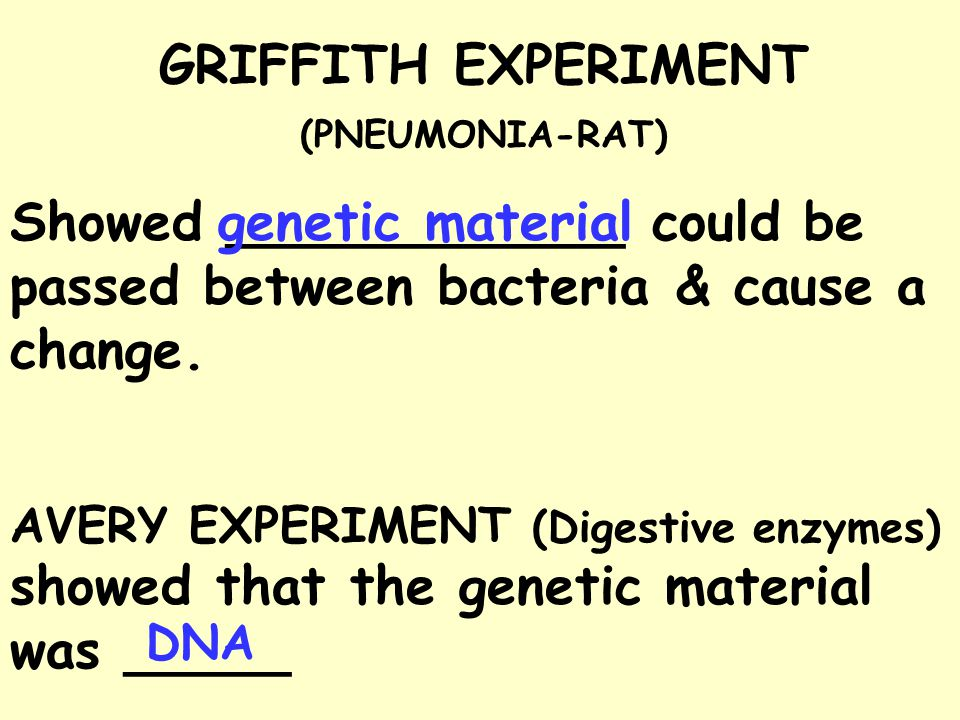 GRIFFITH EXPERIMENT (PNEUMONIA-RAT) Showed ____________ could be passed between bacteria & cause a change.