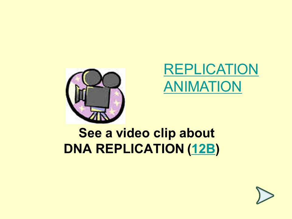 See a video clip about DNA REPLICATION (12B)12B REPLICATION ANIMATION