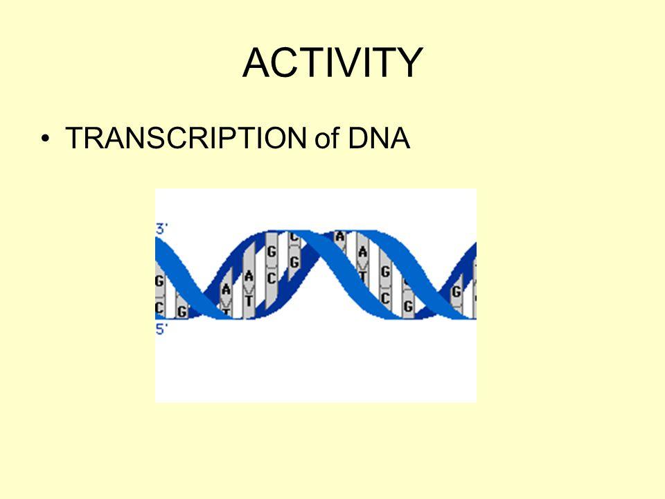 ACTIVITY TRANSCRIPTION of DNA
