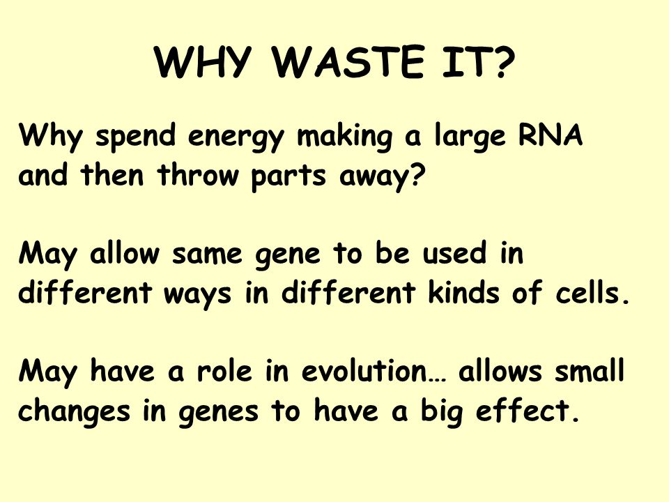 WHY WASTE IT. Why spend energy making a large RNA and then throw parts away.