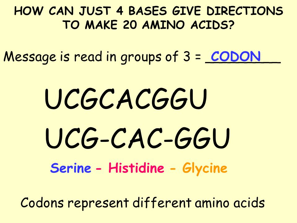 HOW CAN JUST 4 BASES GIVE DIRECTIONS TO MAKE 20 AMINO ACIDS.