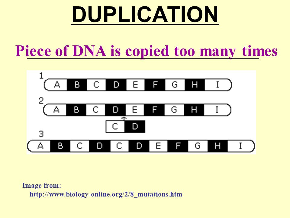 DUPLICATION Piece of DNA is copied too many times ________________________________________________ Image from: http://www.biology-online.org/2/8_mutations.htm