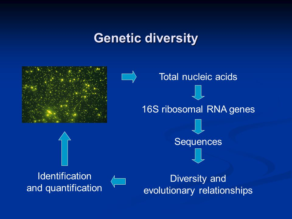 Genetic diversity Total nucleic acids 16S ribosomal RNA genes Sequences Diversity and evolutionary relationships Identification and quantification