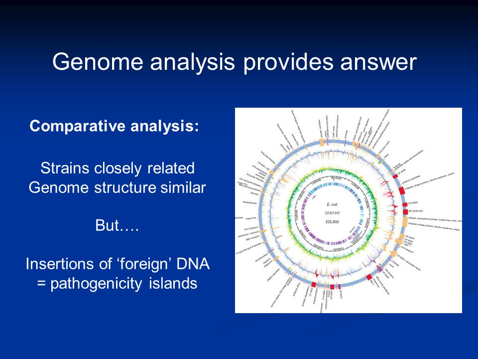 Genome analysis provides answer Strains closely related Genome structure similar But….