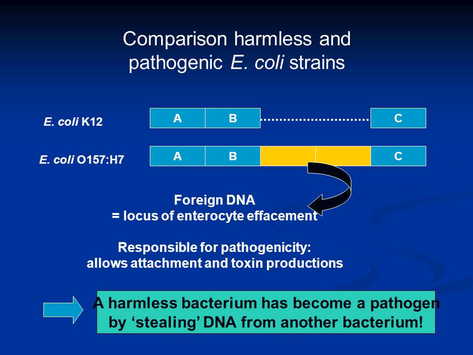 Comparison harmless and pathogenic E.coli strains AB AB C C E.