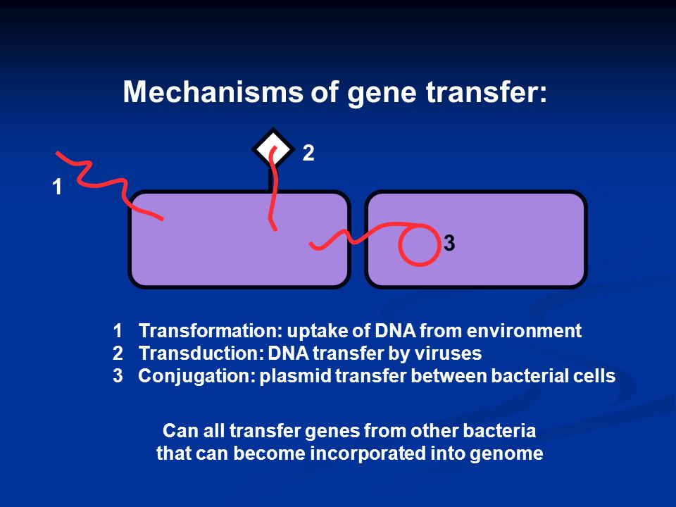 Mechanisms of gene transfer: 1 Transformation: uptake of DNA from environment 2 Transduction: DNA transfer by viruses 3 Conjugation: plasmid transfer between bacterial cells 1 2 3 Can all transfer genes from other bacteria that can become incorporated into genome