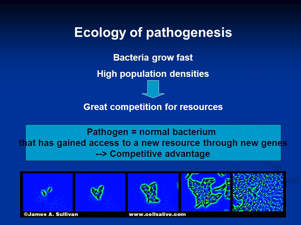 Ecology of pathogenesis Bacteria grow fast High population densities Great competition for resources Pathogen = normal bacterium that has gained access to a new resource through new genes --> Competitive advantage