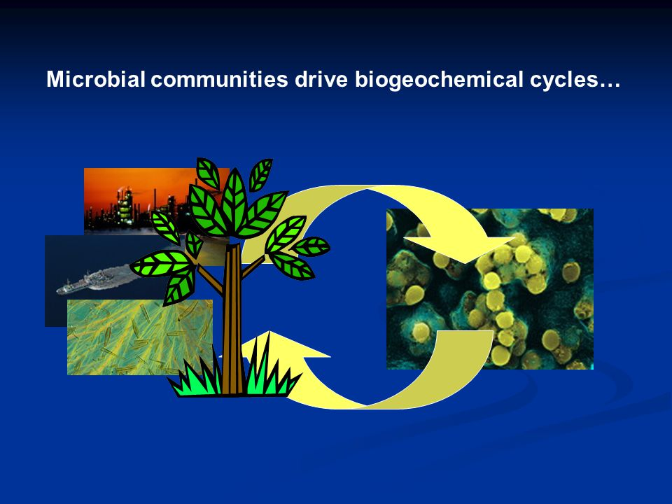 Microbial communities drive biogeochemical cycles…