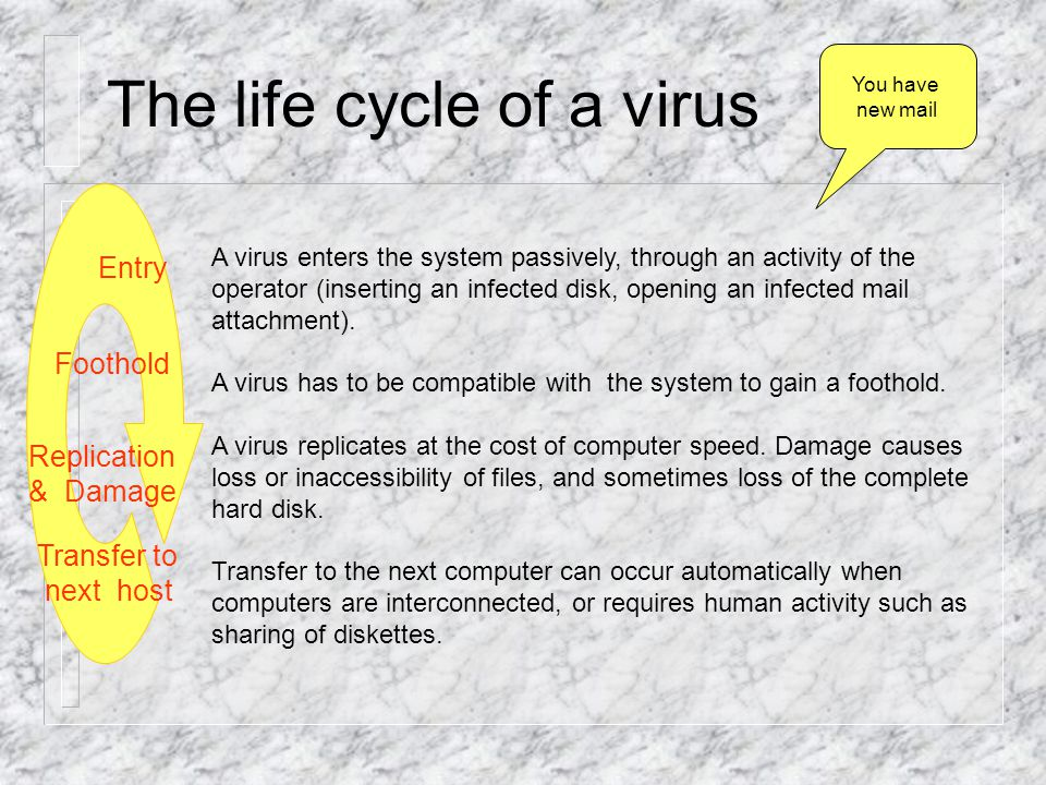 Response of the host Viruses have evolved with their hosts.