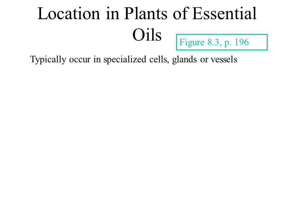 Location in Plants of Essential Oils Typically occur in specialized cells, glands or vessels Figure 8.3, p.