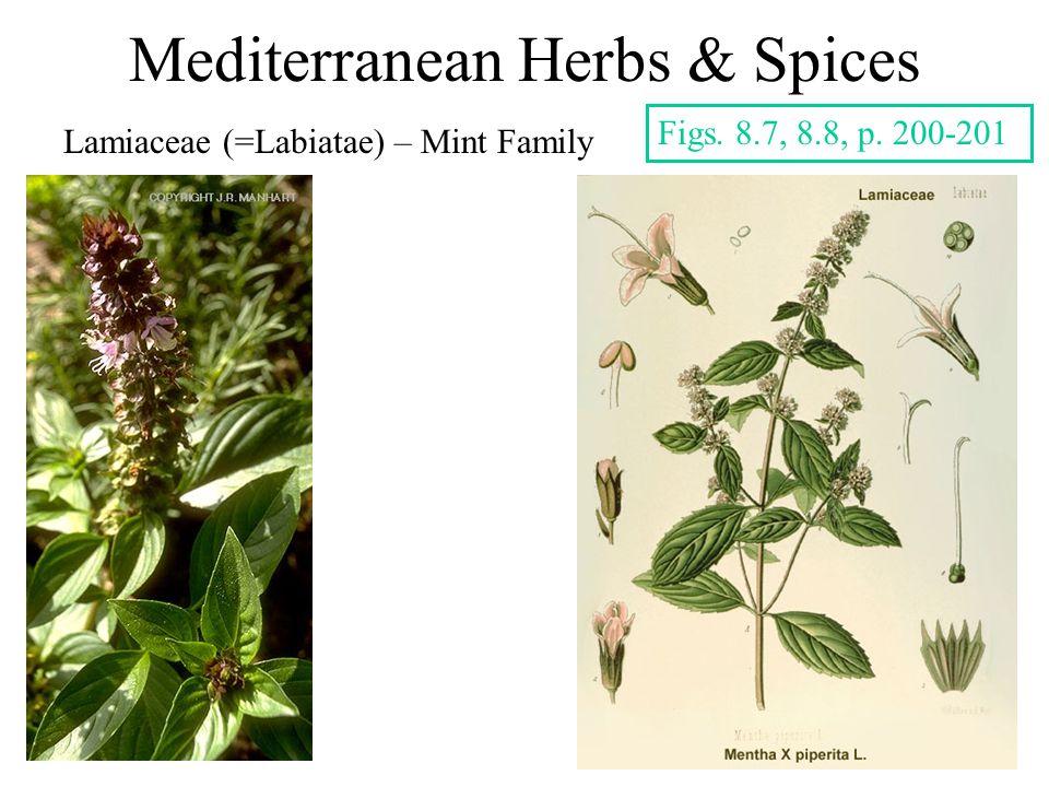 Mediterranean Herbs & Spices Lamiaceae (=Labiatae) – Mint Family Figs. 8.7, 8.8, p. 200-201