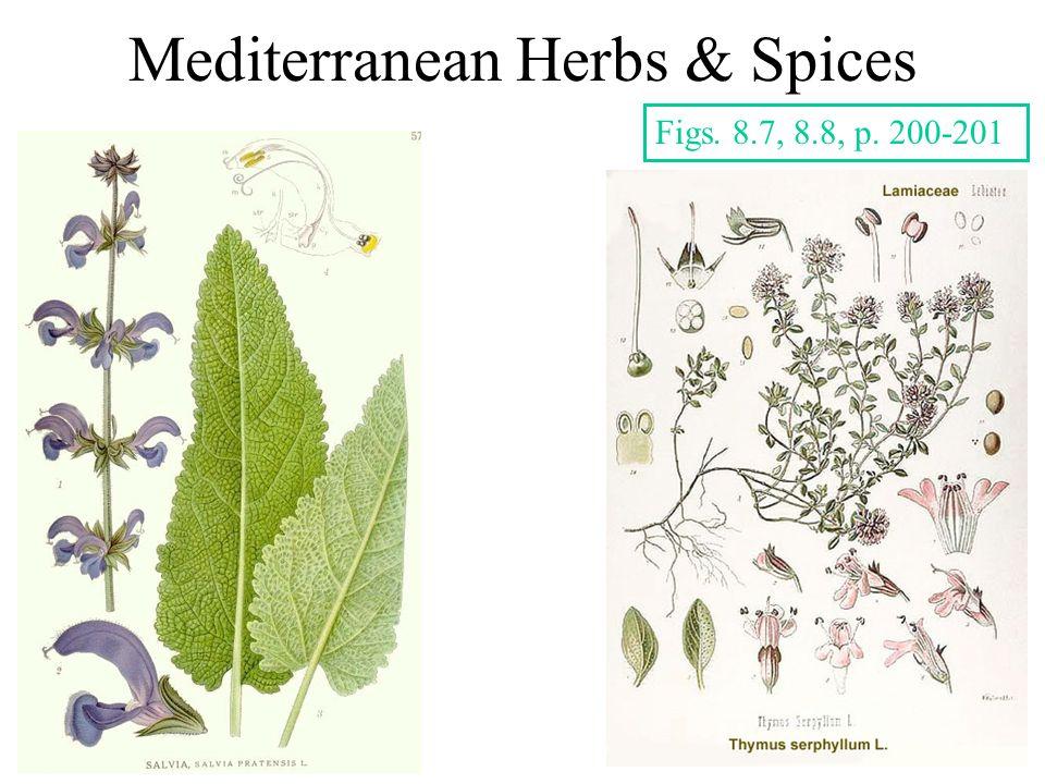 Mediterranean Herbs & Spices Figs. 8.7, 8.8, p. 200-201