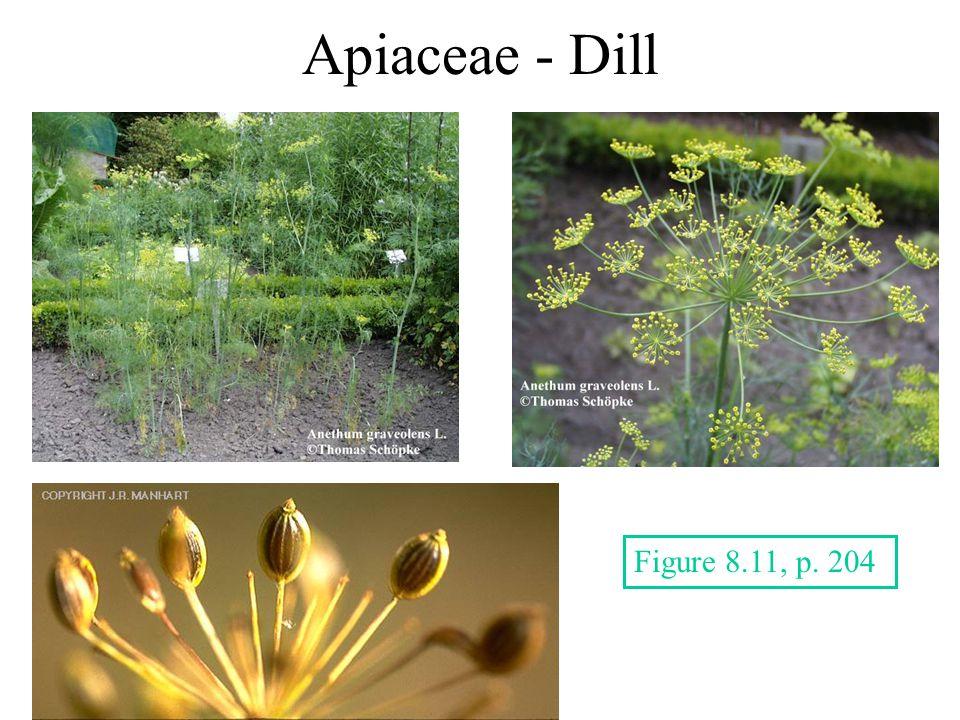 Apiaceae - Dill Figure 8.11, p. 204