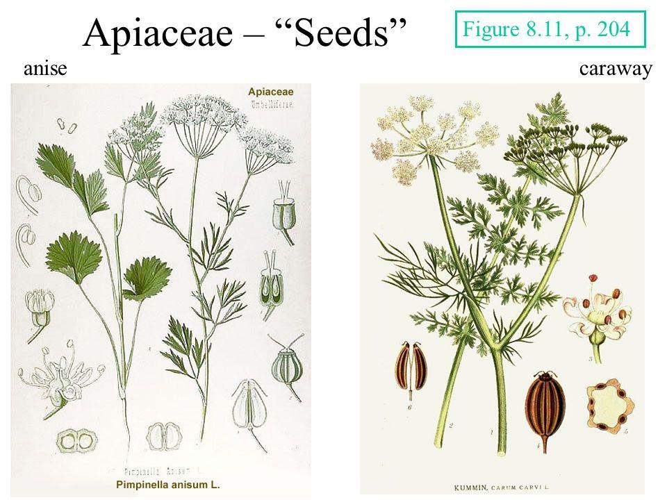 Apiaceae – Seeds anisecaraway Figure 8.11, p. 204