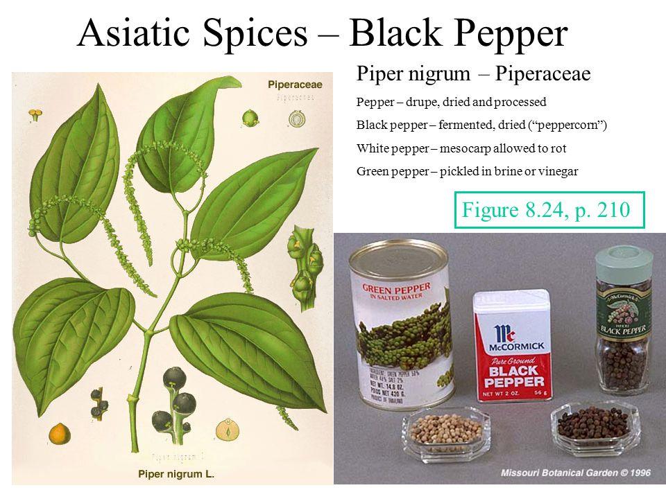 Asiatic Spices – Black Pepper Piper nigrum – Piperaceae Pepper – drupe, dried and processed Black pepper – fermented, dried ( peppercorn ) White pepper – mesocarp allowed to rot Green pepper – pickled in brine or vinegar Figure 8.24, p.