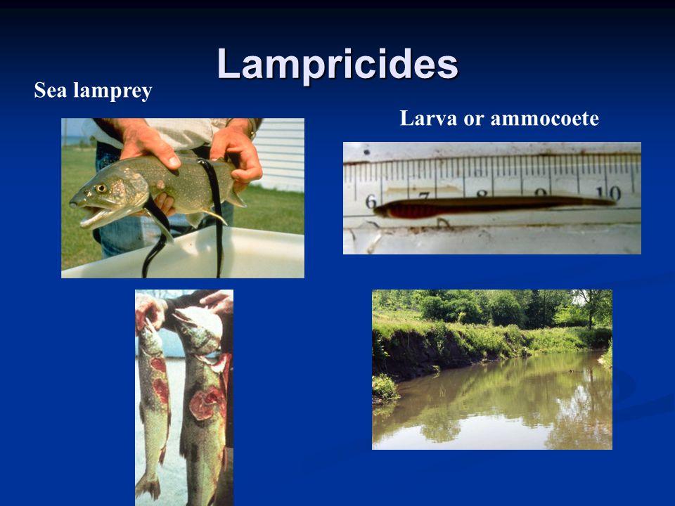 Lampricides Sea lamprey Larva or ammocoete