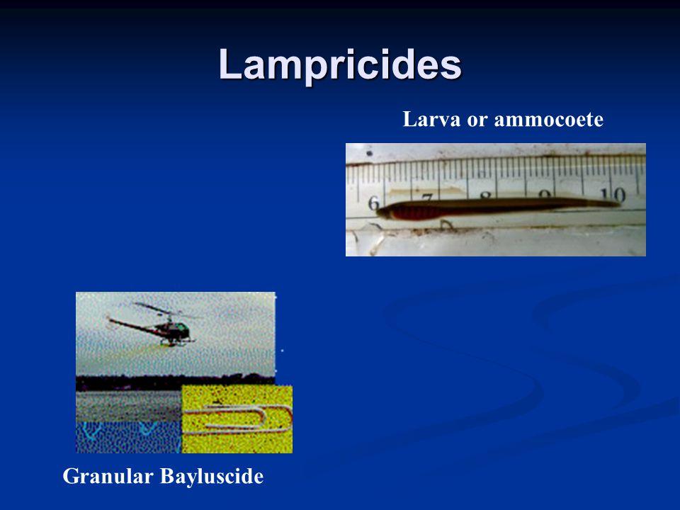 Lampricides Granular Bayluscide