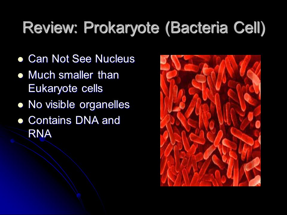 Review: Prokaryote (Bacteria Cell) Can Not See Nucleus Can Not See Nucleus Much smaller than Eukaryote cells Much smaller than Eukaryote cells No visible organelles No visible organelles Contains DNA and RNA Contains DNA and RNA