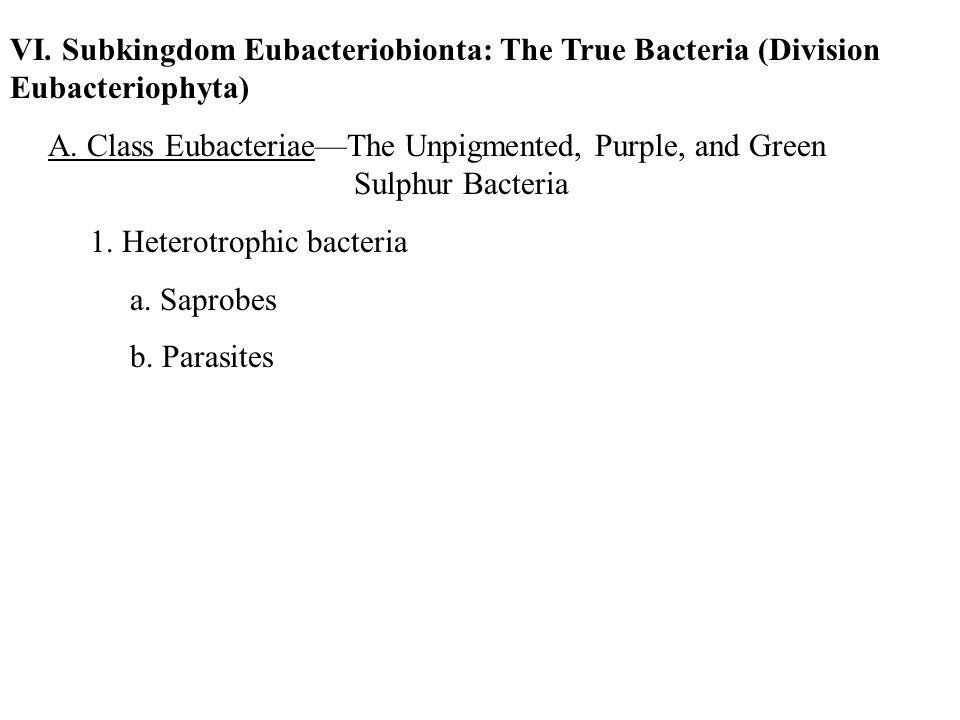 VI. Subkingdom Eubacteriobionta: The True Bacteria (Division Eubacteriophyta) A. Class Eubacteriae—The Unpigmented, Purple, and Green Sulphur Bacteria