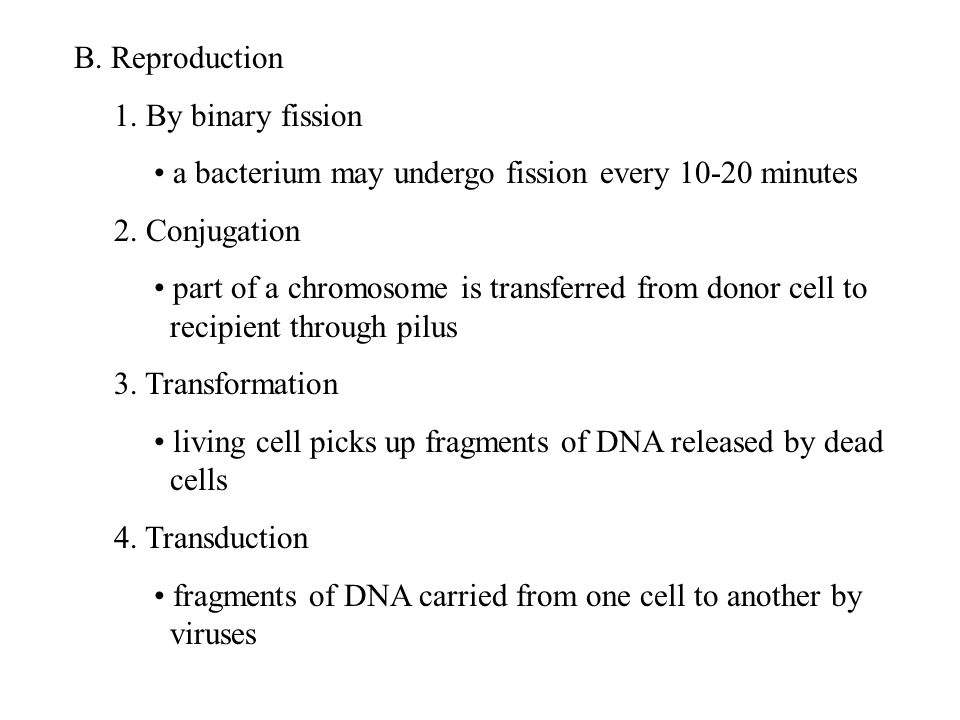 B. Reproduction 1. By binary fission a bacterium may undergo fission every 10-20 minutes 2.