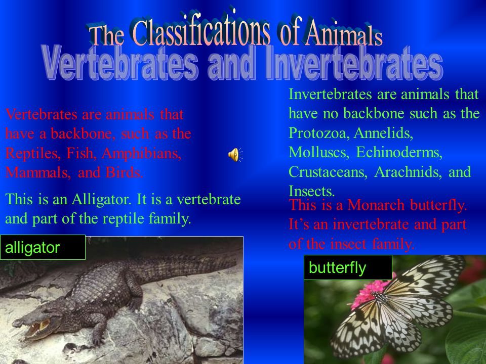 Invertebrates are animals that have no backbone such as the Protozoa, Annelids, Molluscs, Echinoderms, Crustaceans, Arachnids, and Insects.