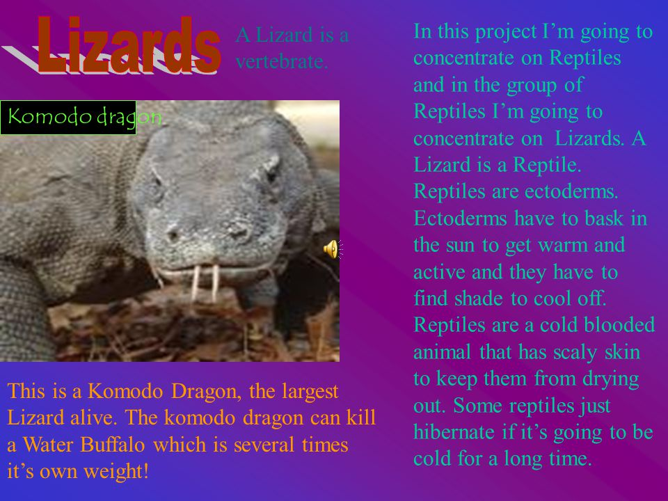 In this project I'm going to concentrate on Reptiles and in the group of Reptiles I'm going to concentrate on Lizards.