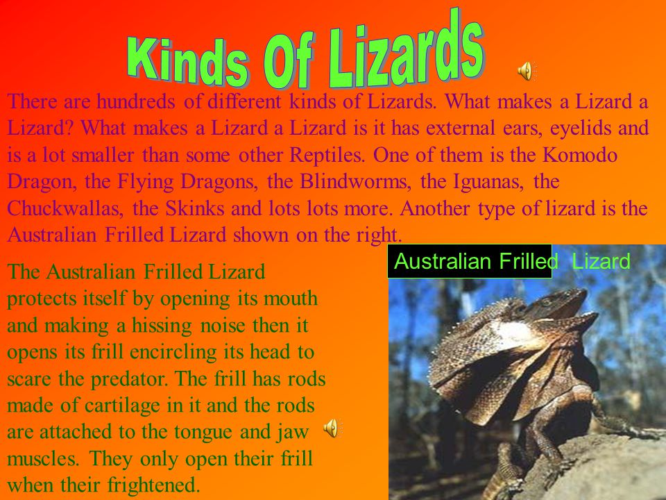There are hundreds of different kinds of Lizards.What makes a Lizard a Lizard.