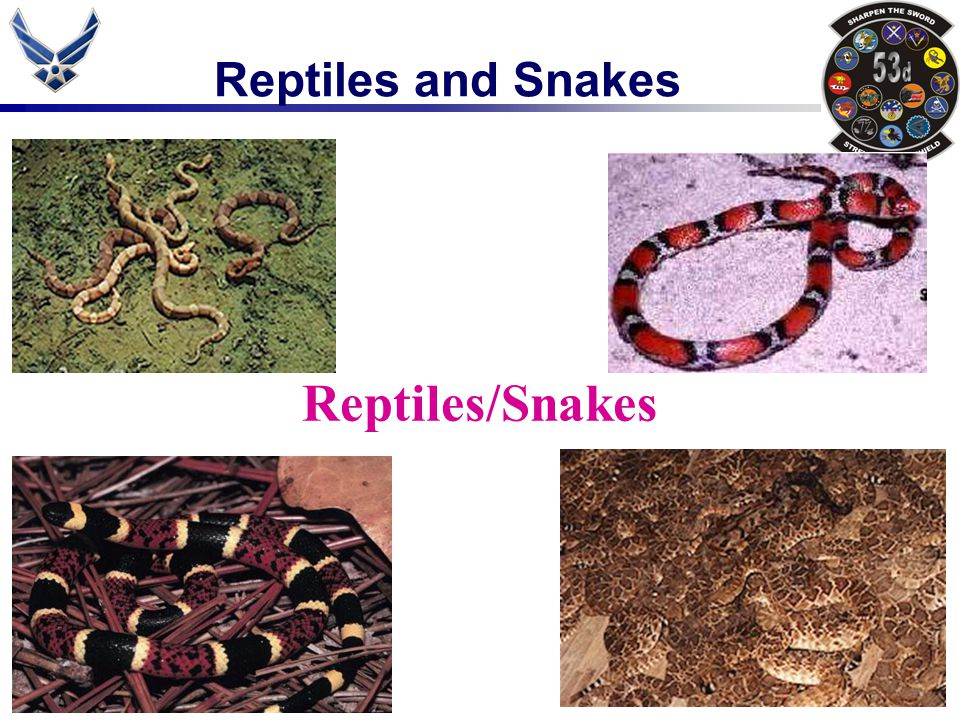 Reptiles and Snakes About Snakes Snakes are reptiles.