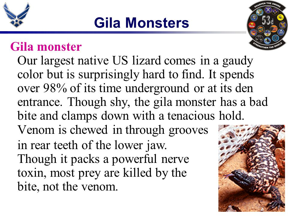 Gila Monsters Gila monster Our largest native US lizard comes in a gaudy color but is surprisingly hard to find. It spends over 98% of its time underg