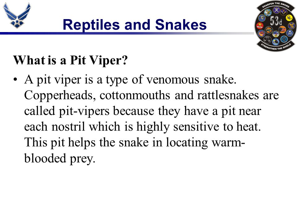 What is a Pit Viper? A pit viper is a type of venomous snake. Copperheads, cottonmouths and rattlesnakes are called pit-vipers because they have a pit