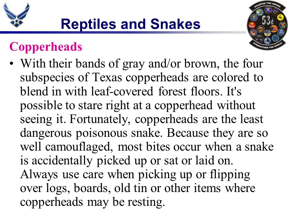 Copperheads With their bands of gray and/or brown, the four subspecies of Texas copperheads are colored to blend in with leaf-covered forest floors. I