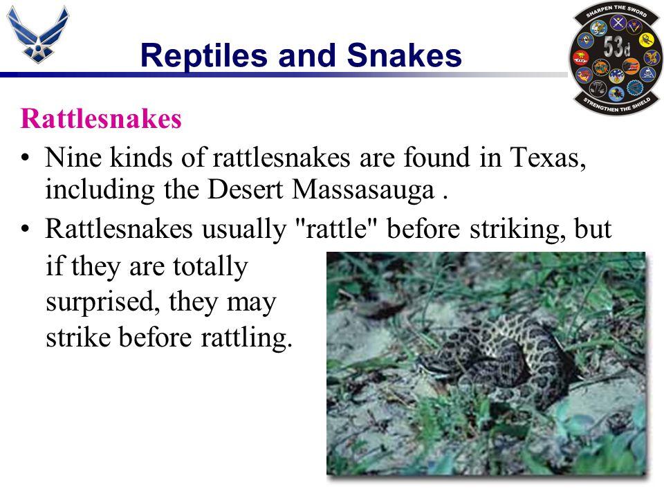 Rattlesnakes Nine kinds of rattlesnakes are found in Texas, including the Desert Massasauga. Rattlesnakes usually