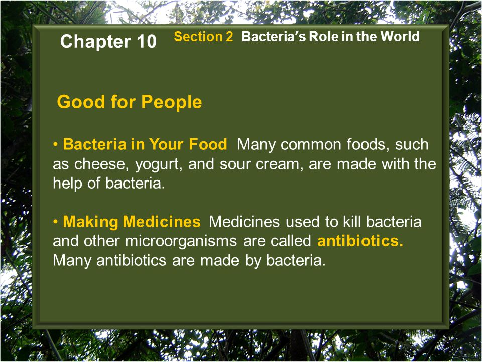 Good for People Bacteria in Your Food Many common foods, such as cheese, yogurt, and sour cream, are made with the help of bacteria. Making Medicines