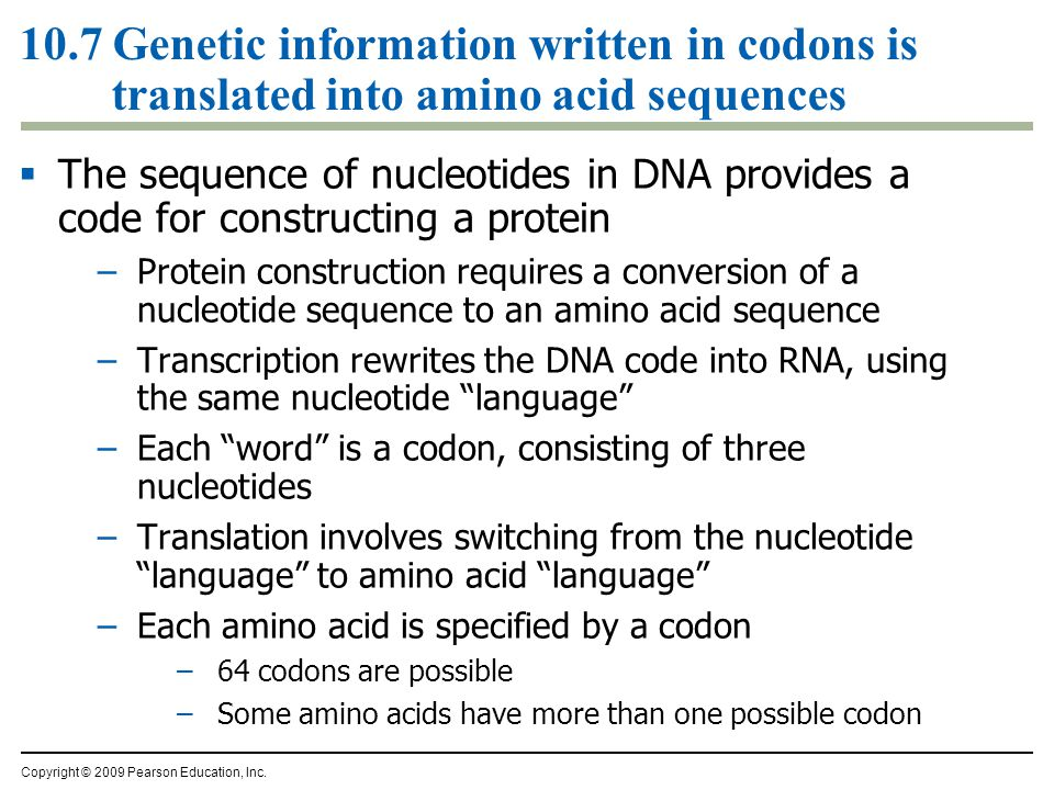 10.7 Genetic information written in codons is translated into amino acid sequences  The sequence of nucleotides in DNA provides a code for constructi
