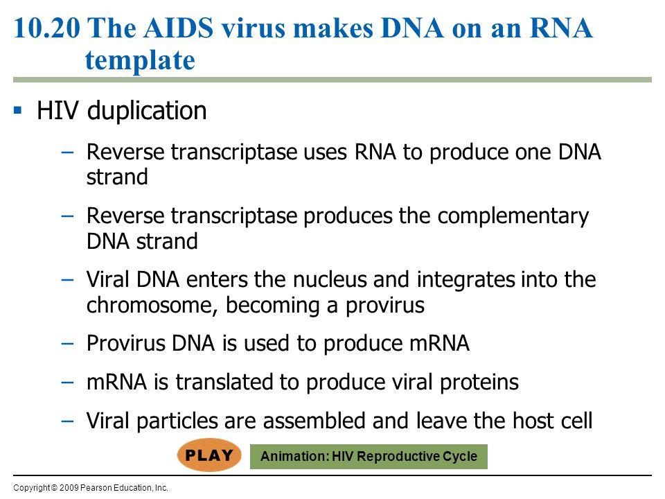  HIV duplication –Reverse transcriptase uses RNA to produce one DNA strand –Reverse transcriptase produces the complementary DNA strand –Viral DNA en