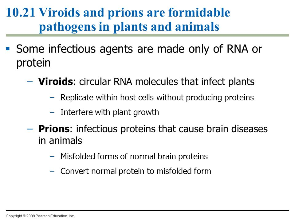 10.21 Viroids and prions are formidable pathogens in plants and animals  Some infectious agents are made only of RNA or protein –Viroids: circular RN
