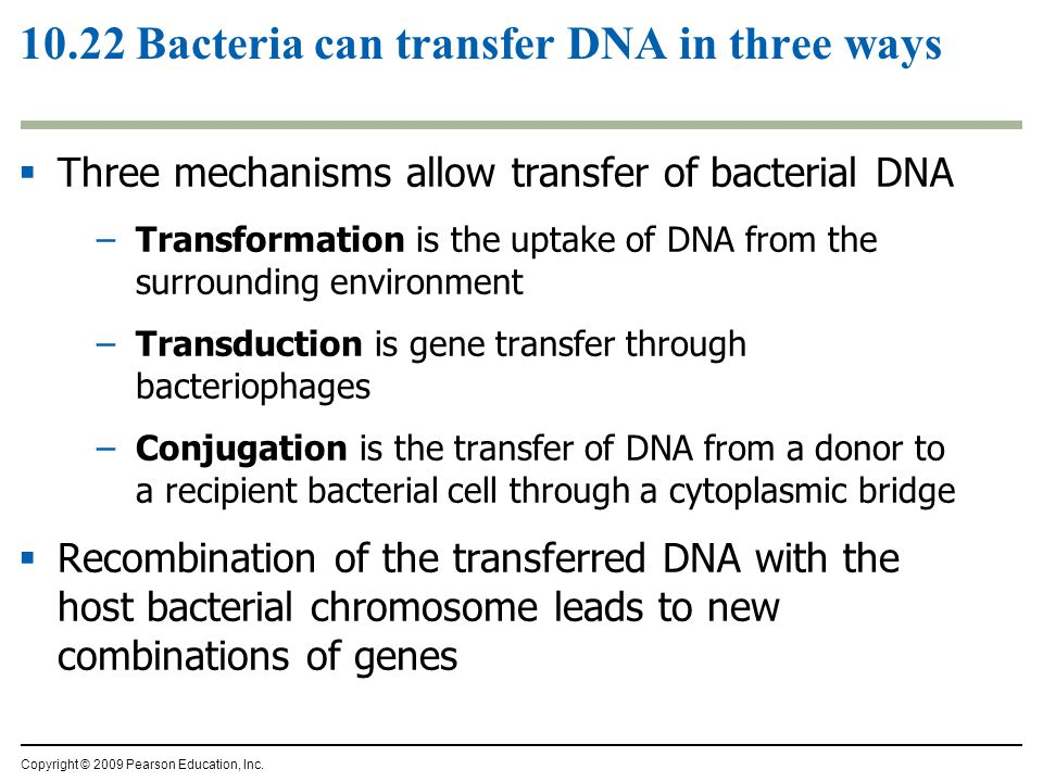10.22 Bacteria can transfer DNA in three ways  Three mechanisms allow transfer of bacterial DNA –Transformation is the uptake of DNA from the surroun
