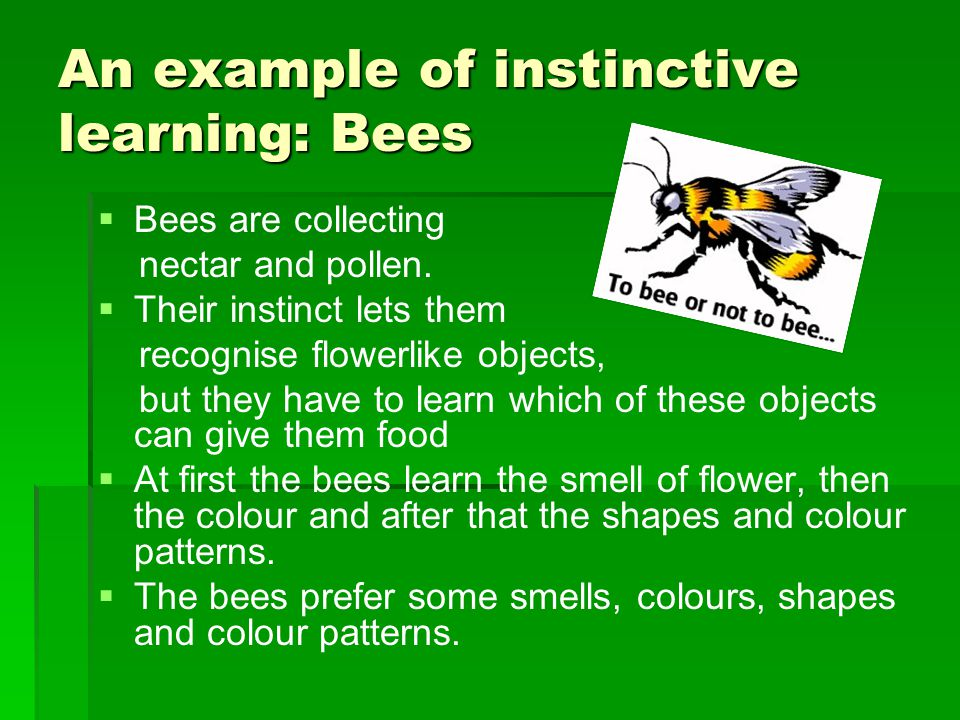 An example of instinctive learning: Bees   Bees are collecting nectar and pollen.