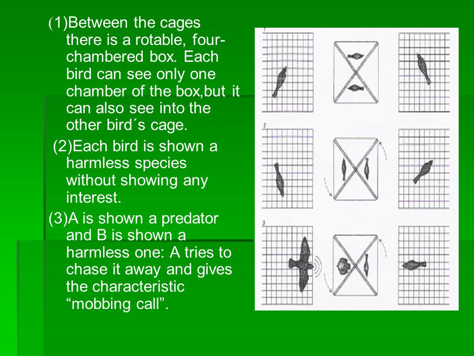 ( 1)Between the cages there is a rotable, four- chambered box.