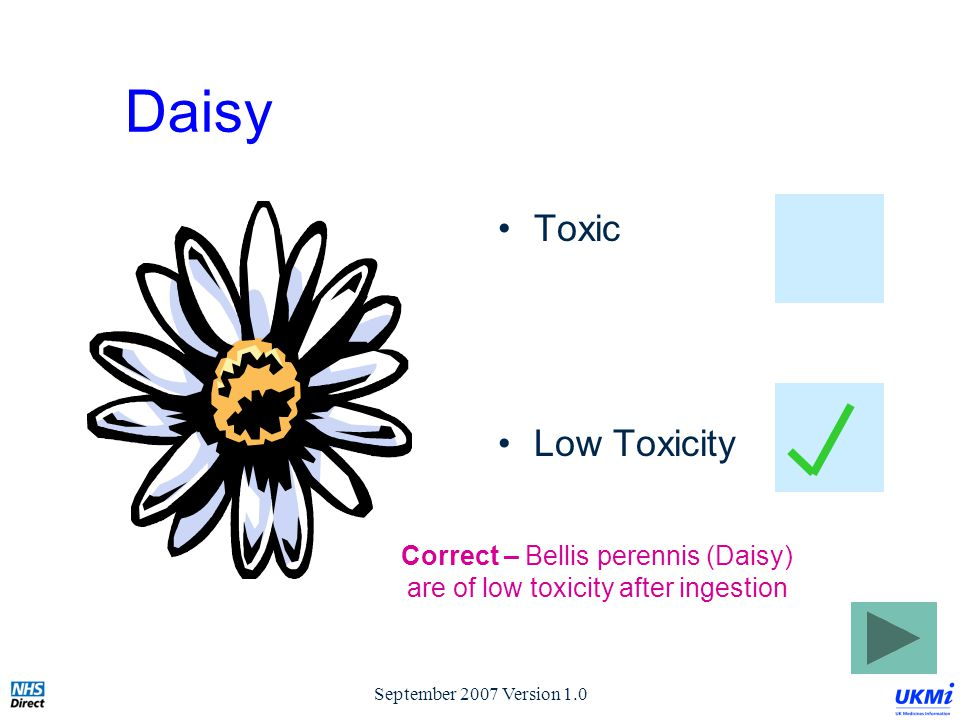 September 2007 Version 1.0 Daisy Toxic Low Toxicity Correct – Bellis perennis (Daisy) are of low toxicity after ingestion